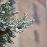 La torre e la neve. Montebello della battaglia (PV)